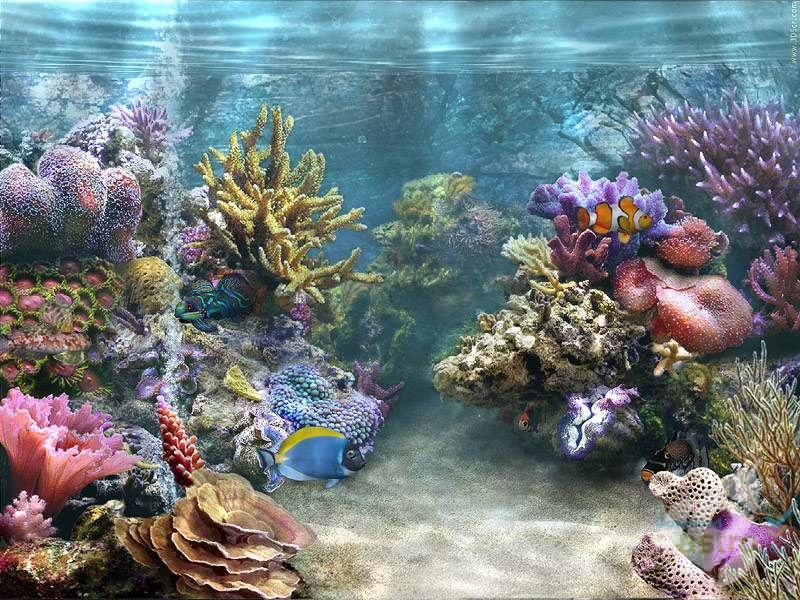 Download 540 Koleksi Wallpaper Animasi Aquarium Untuk Pc HD Terbaru